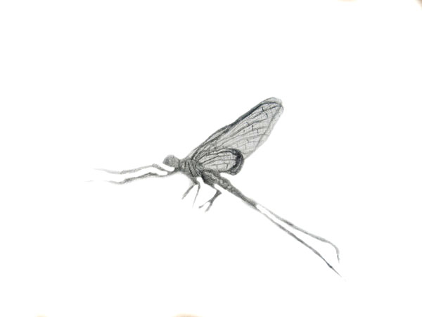 mayfly tattoo design by sillysammy