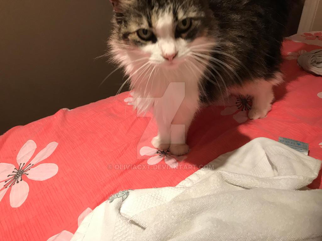 Meet Moxy the kittu by OliviaCxt