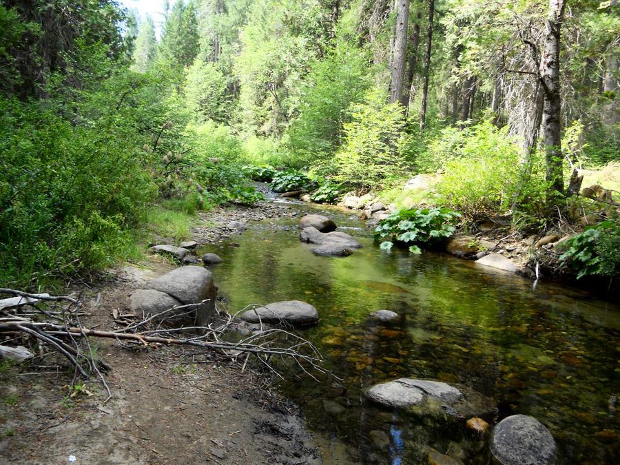 Camping in Cali