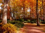 Rake the fall leaves