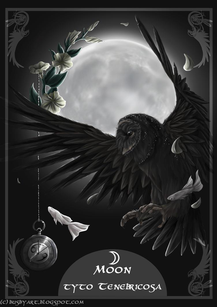 solar owls moon by busbyart