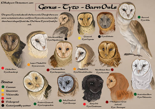 Tyto species chart by busbyart