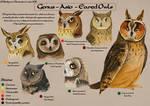 Asio Species chart