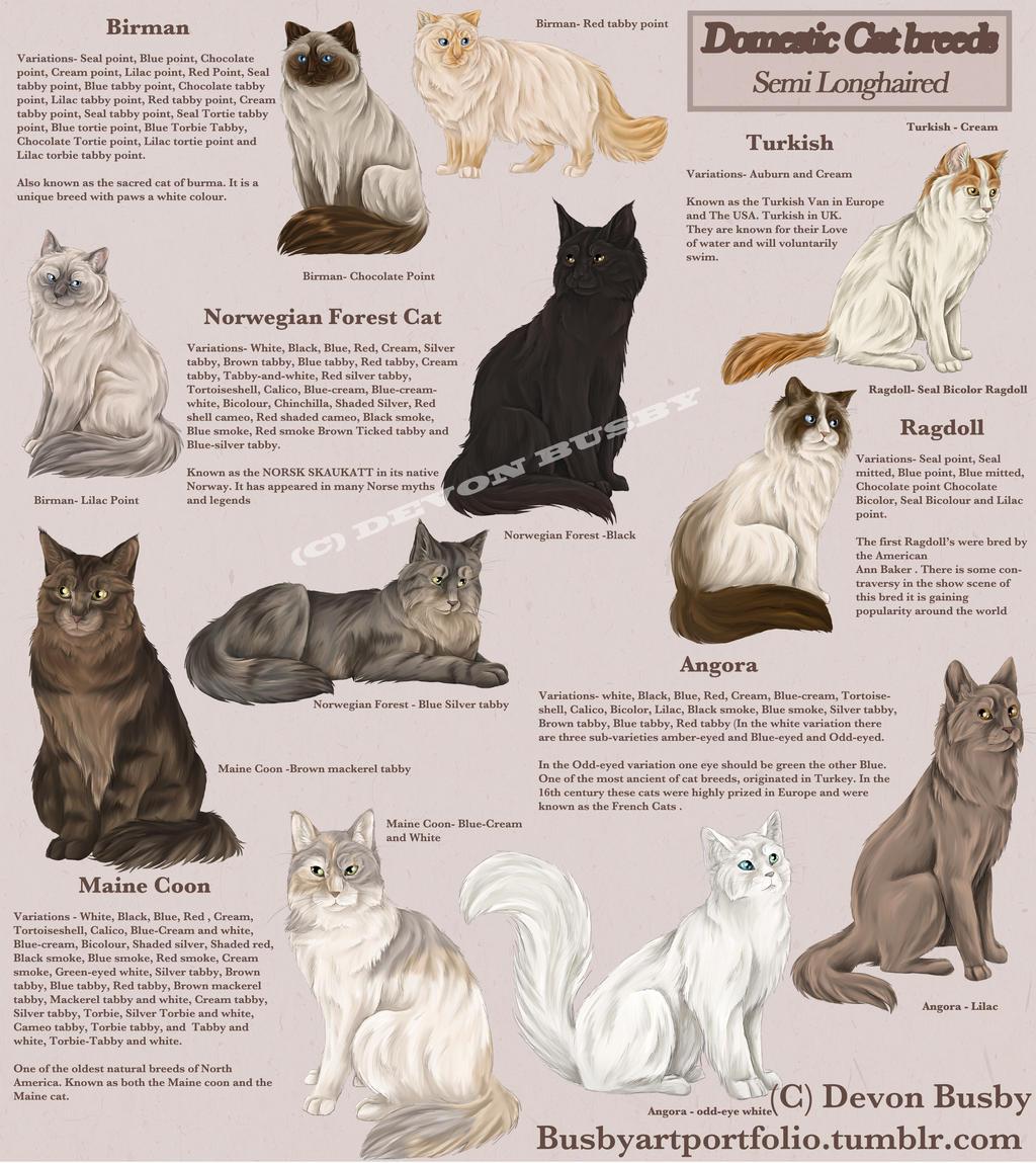 Cat breed guide semi long haired by busbyart on DeviantArt