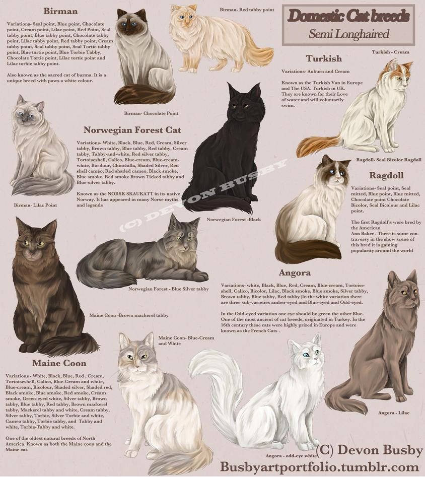 Semi Long Haired Cat Genetics