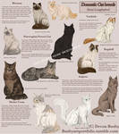 Cat breed guide - semi long haired