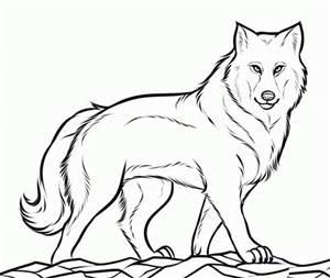 Wolf by pokemongirl223344 by pokemongirl223344