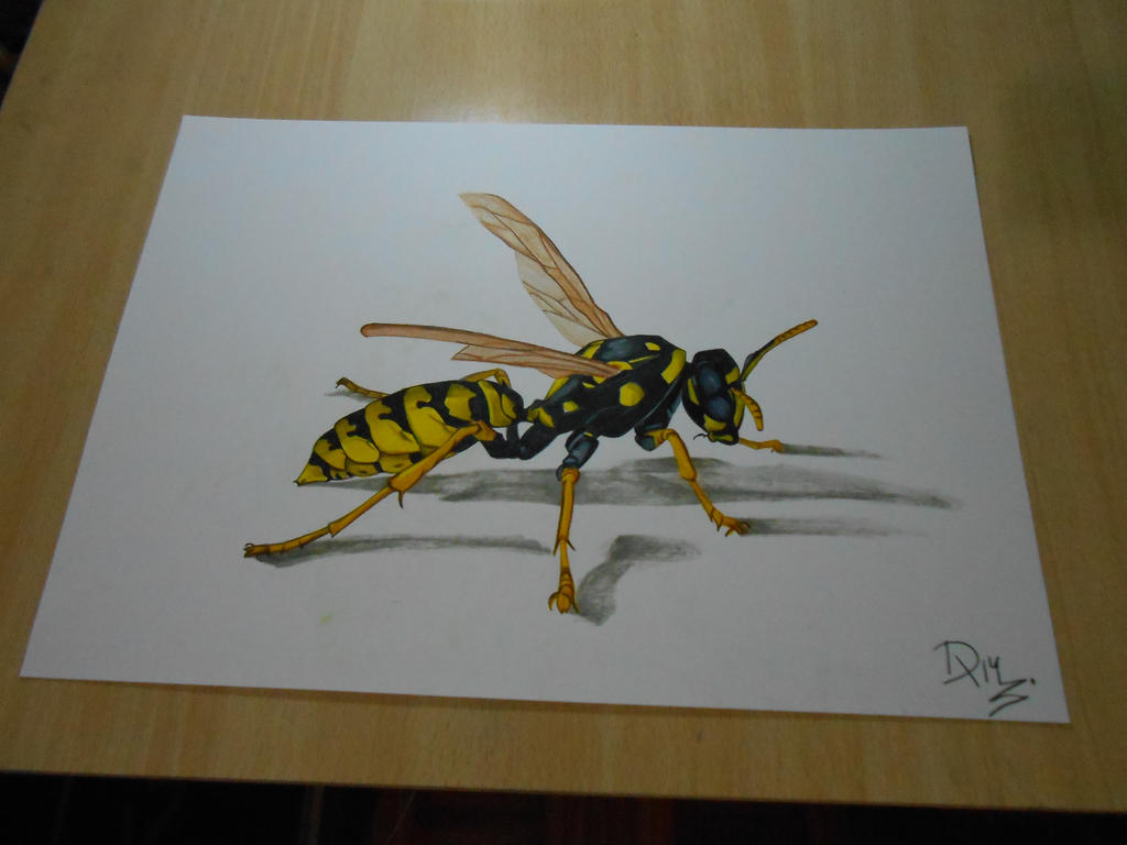 How to draw a wasp - drawing 3d illusion by