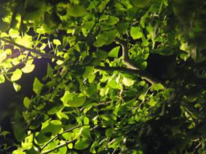 Glowing In The Night