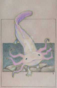 FaunaFocus-Axolotl