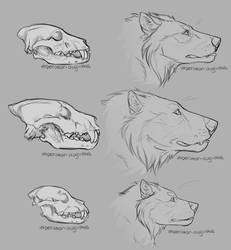 Toko Skull Anatomy and Speculative Evolution by DioMEMEdes