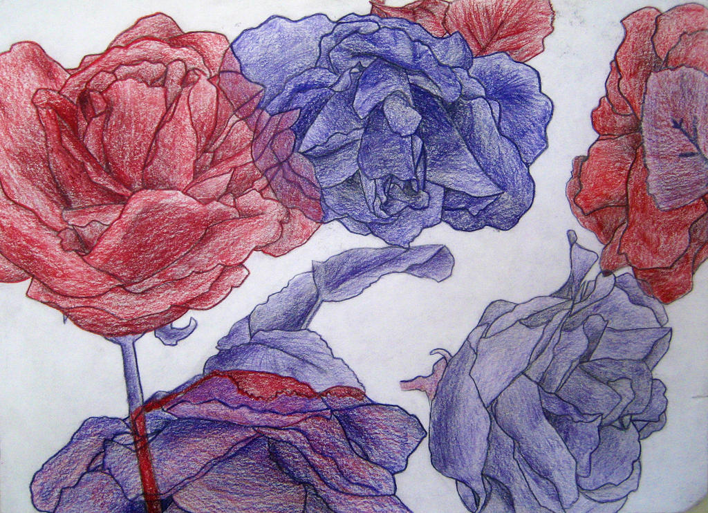 Contour Line Drawing Rose : Contour line drawing rose by squeemishness on deviantart