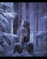 Lil Tiger by ChiantyVex