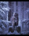 Lil Tiger