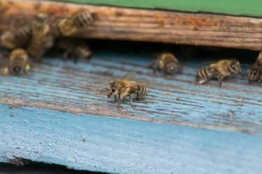 Queen Bee by ChiantyVex