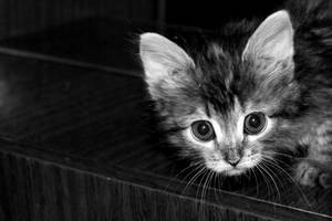 Who's there?! O_o by Tatyana-Sanina