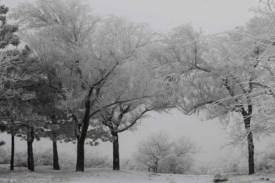 Winter kingdom by Tatyana-Sanina