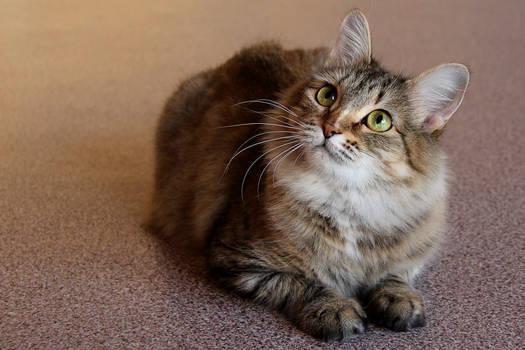 A cat 6