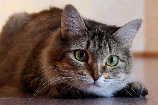 A cat 9