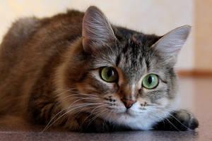A cat 9 by Tatyana-Sanina