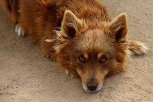 A dog by Tatyana-Sanina