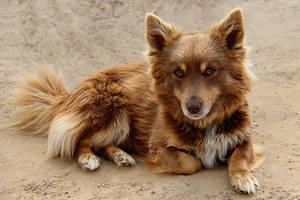 A dog 2 by Tatyana-Sanina