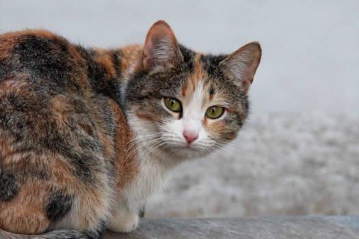 A cat 10