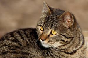 A cat 14 by Tatyana-Sanina