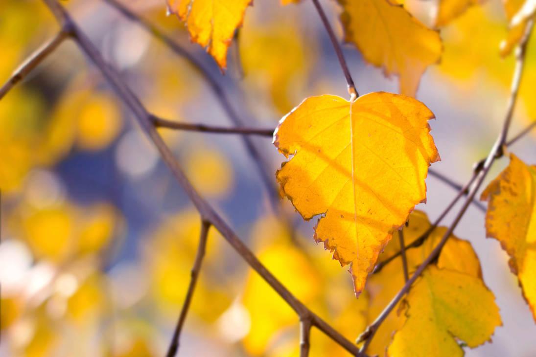 Birch leaves 2 by Tatyana-Sanina
