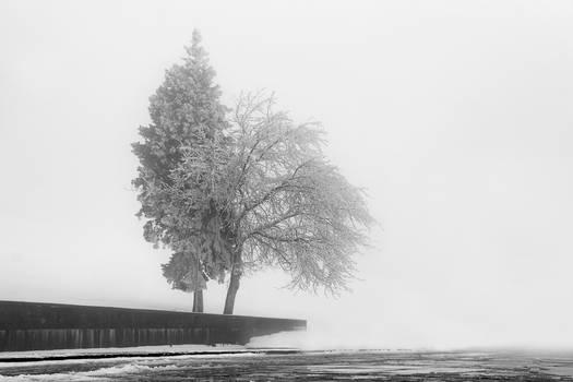 Winter foggy day 7