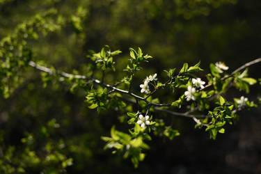 Flowers 8 by Tatyana-Sanina