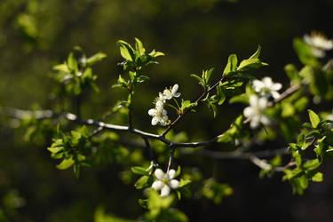 Flowers 7 by Tatyana-Sanina