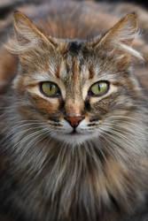 A cat 25 by Tatyana-Sanina
