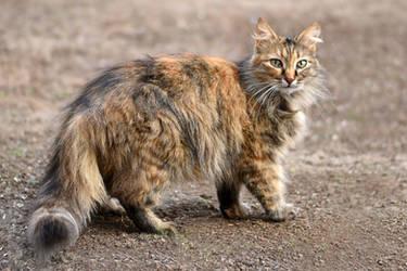A cat 26 by Tatyana-Sanina