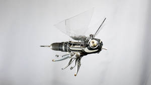 Male CyberBug