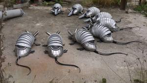Nine Armadillos