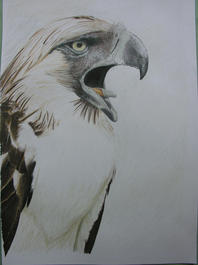 How to draw Philippine eagle