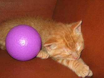 Kitty sleeping with purple ball by as2000