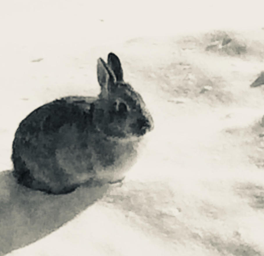 Rabbit in the Snow 1 by TheOtherBillionaire