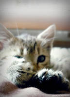 Little paws by Iulia-Oprinesc