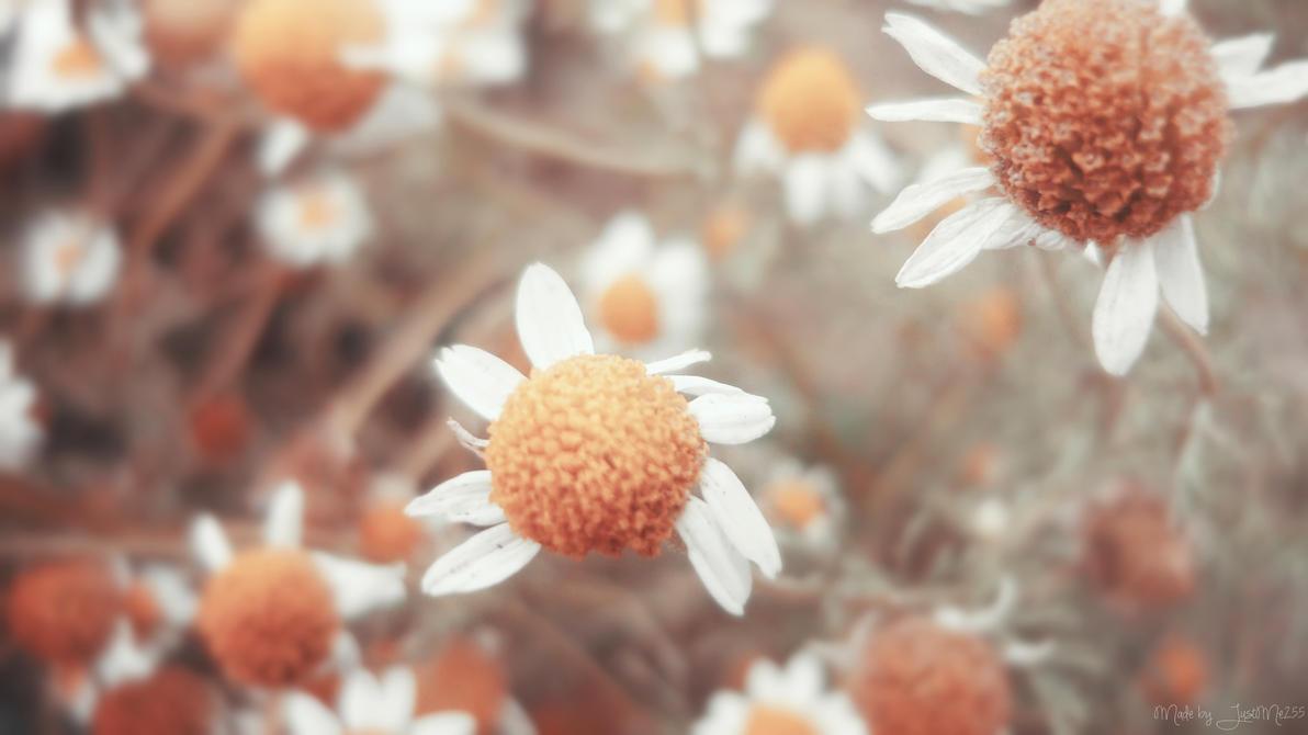 Frozen by Iulia-Oprinesc