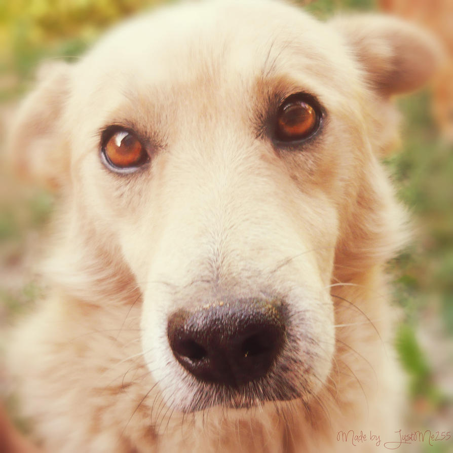 Puppy face by Iulia-Oprinesc