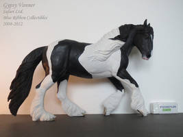 Collection Images: Gypsy Vanner by Safari by CarolaFunder