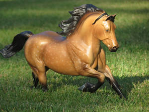 Collection Images: Copperfox Welsh Cob 2