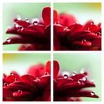 Hydrophobic effect III