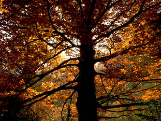Tree in Ordesa