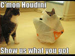 Funny Lol Cat