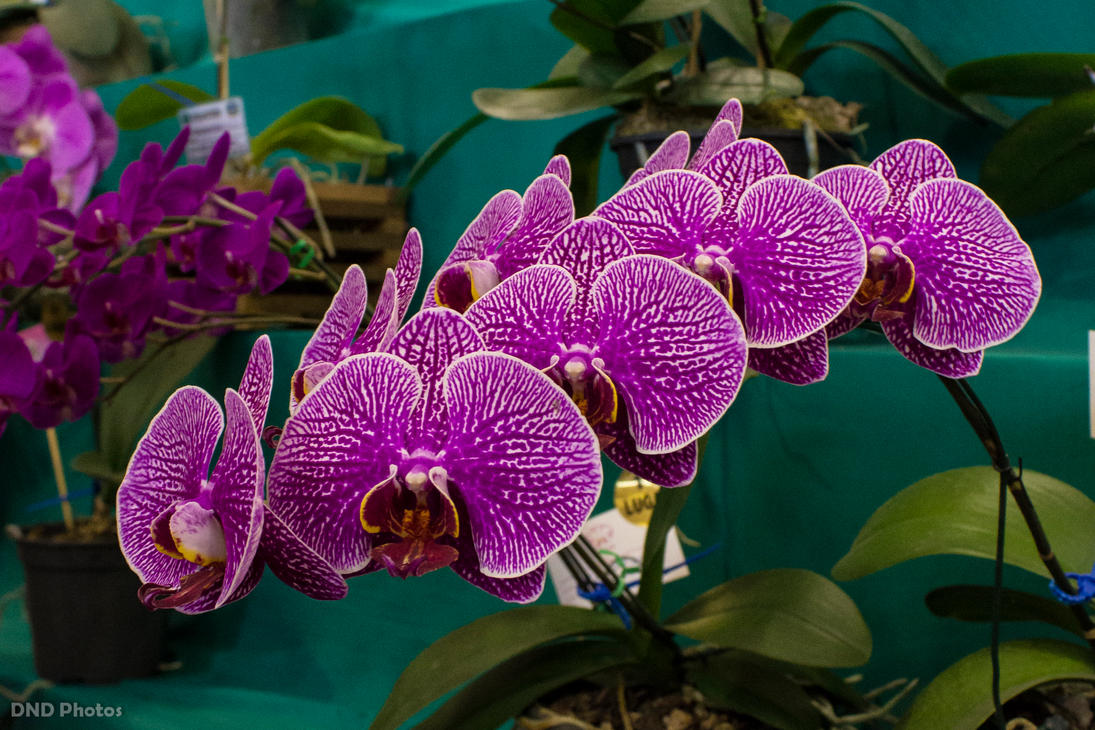 Festa das Flores #4 by DNDBlog