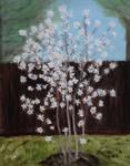 Star Magnolia Tree by CarolynYM