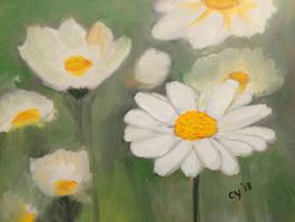 Daisies by CarolynYM